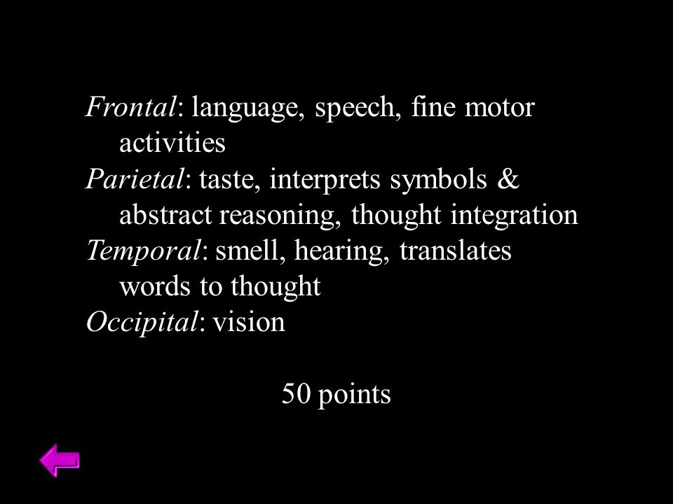 Frontal: language, speech, fine motor activities Parietal: taste, interprets symbols & abstract reasoning, thought integration Temporal: smell, hearing, translates words to thought Occipital: vision 50 points