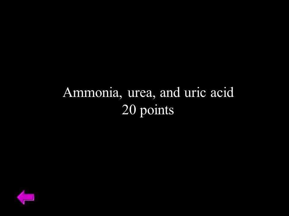 Ammonia, urea, and uric acid 20 points