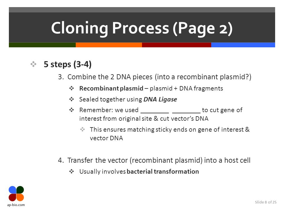 Slide 8 of 25 Cloning Process (Page 2) 5 steps (3-4) 3. Combine the 2 DNA pieces (into a recombinant plasmid?) Recombinant plasmid – plasmid + DNA fra