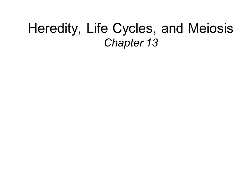 Heredity, Life Cycles, and Meiosis Chapter 13