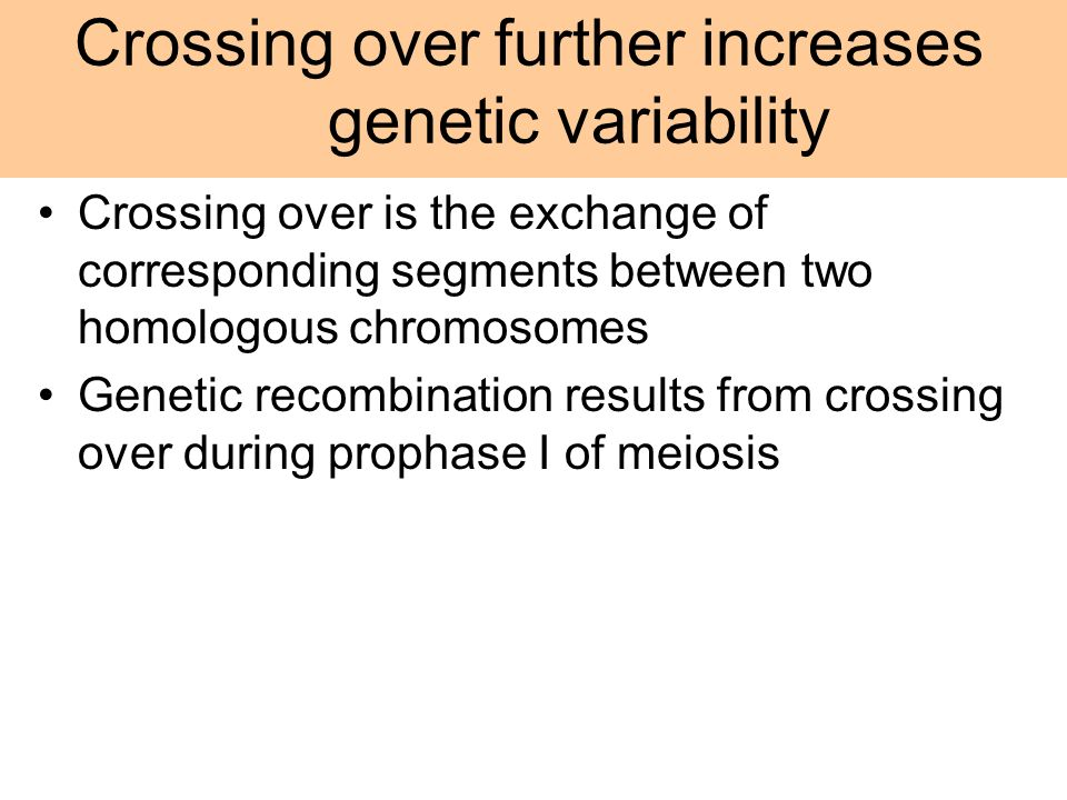 Crossing over is the exchange of corresponding segments between two homologous chromosomes Genetic recombination results from crossing over during pro