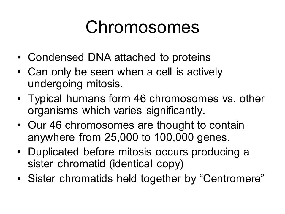Chromosomes Condensed DNA attached to proteins Can only be seen when a cell is actively undergoing mitosis. Typical humans form 46 chromosomes vs. oth