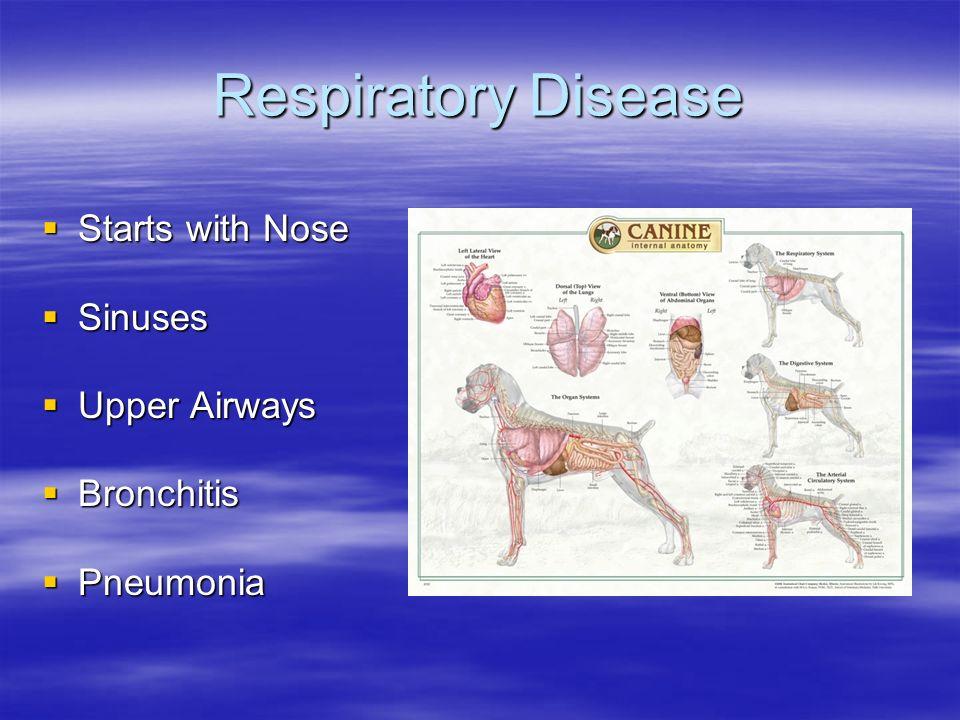 Respiratory Disease Starts with Nose Starts with Nose Sinuses Sinuses Upper Airways Upper Airways Bronchitis Bronchitis Pneumonia Pneumonia