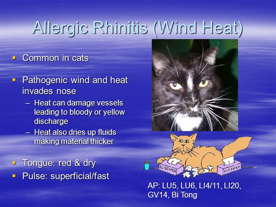 Allergic Rhinitis (Wind Heat) Common in cats Common in cats Pathogenic wind and heat invades nose Pathogenic wind and heat invades nose –Heat can dama