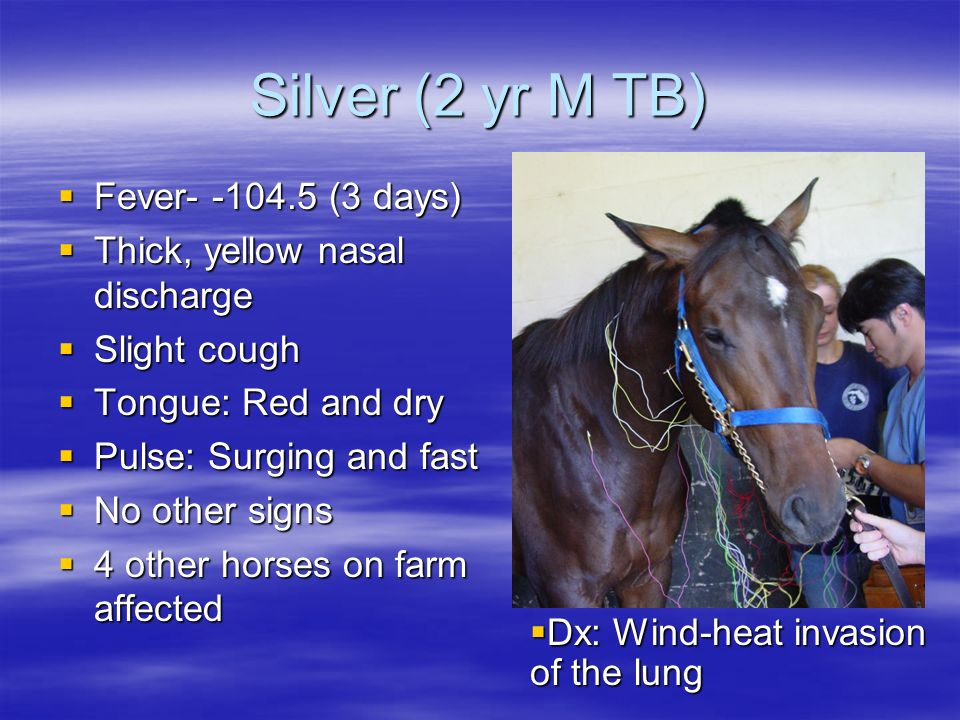 Silver (2 yr M TB) Fever- -104.5 (3 days) Fever- -104.5 (3 days) Thick, yellow nasal discharge Thick, yellow nasal discharge Slight cough Slight cough