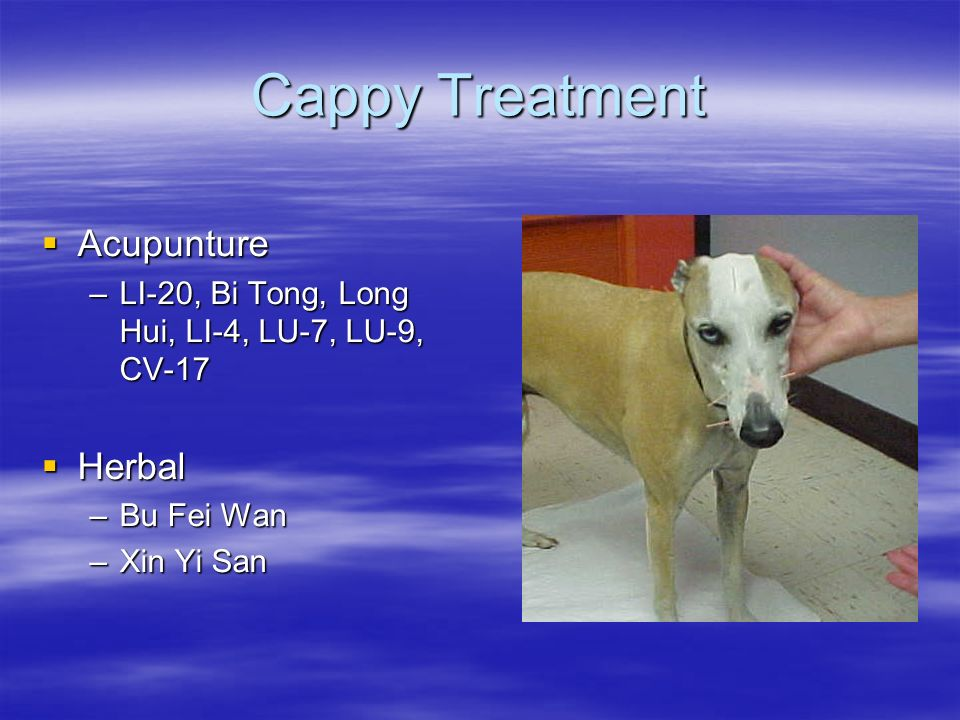 Cappy Treatment Acupunture Acupunture –LI-20, Bi Tong, Long Hui, LI-4, LU-7, LU-9, CV-17 Herbal Herbal –Bu Fei Wan –Xin Yi San