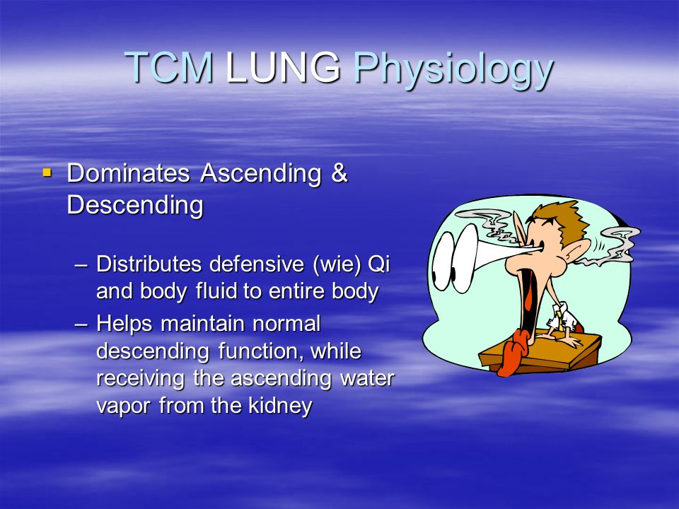 TCM LUNG Physiology Dominates Ascending & Descending Dominates Ascending & Descending –Distributes defensive (wie) Qi and body fluid to entire body –H