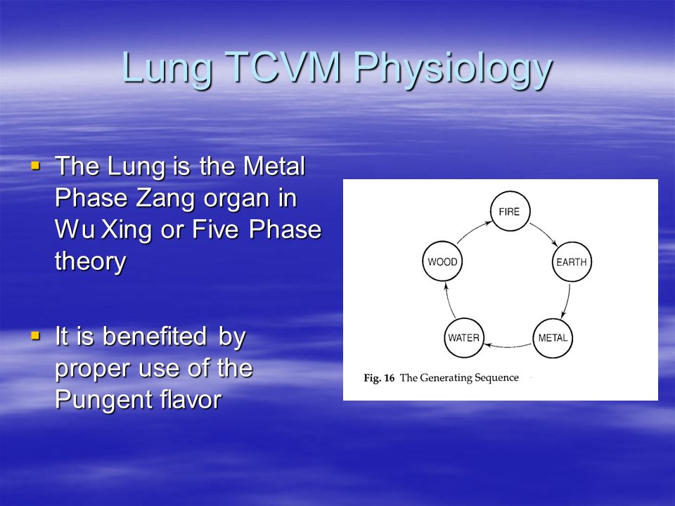 Lung TCVM Physiology The Lung is the Metal Phase Zang organ in Wu Xing or Five Phase theory The Lung is the Metal Phase Zang organ in Wu Xing or Five