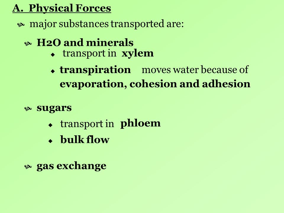 A. Physical Forces H2O and minerals transport in sugars transport in gas exchange xylem moves water because oftranspiration evaporation, cohesion and