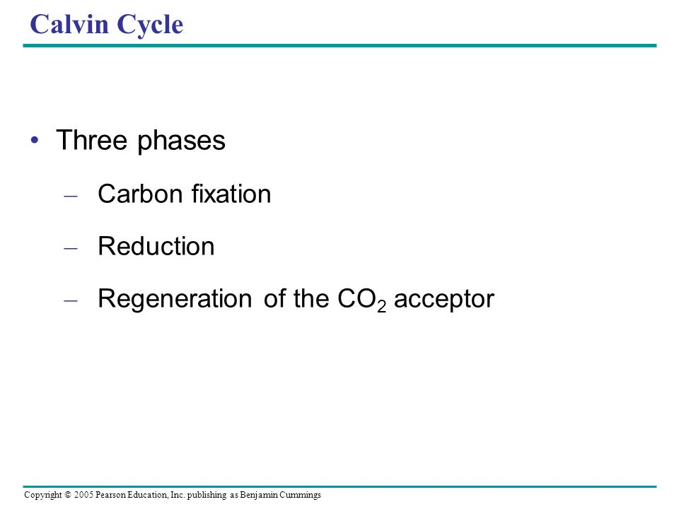 Copyright © 2005 Pearson Education, Inc. publishing as Benjamin Cummings Calvin Cycle Three phases – Carbon fixation – Reduction – Regeneration of the