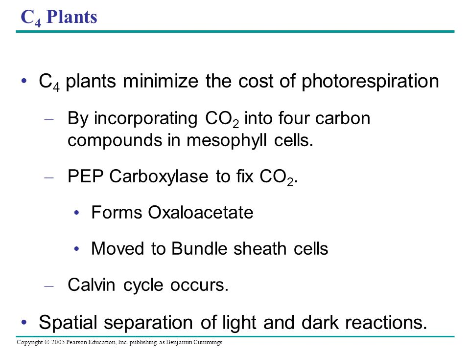 Copyright © 2005 Pearson Education, Inc. publishing as Benjamin Cummings C 4 Plants C 4 plants minimize the cost of photorespiration – By incorporatin
