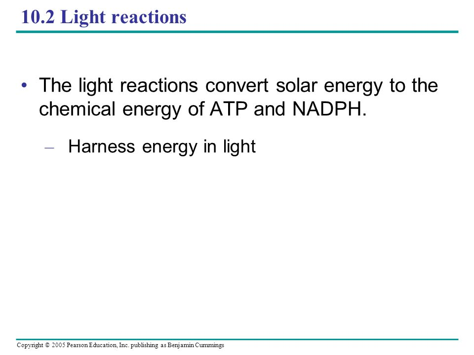 Copyright © 2005 Pearson Education, Inc. publishing as Benjamin Cummings 10.2 Light reactions The light reactions convert solar energy to the chemical