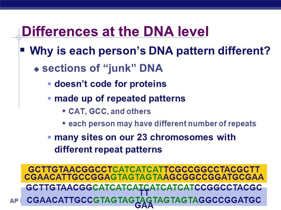 AP Biology DNA fingerprints Comparing blood samples on defendants clothing to determine if it belongs to victim DNA fingerprinting comparing DNA bandi
