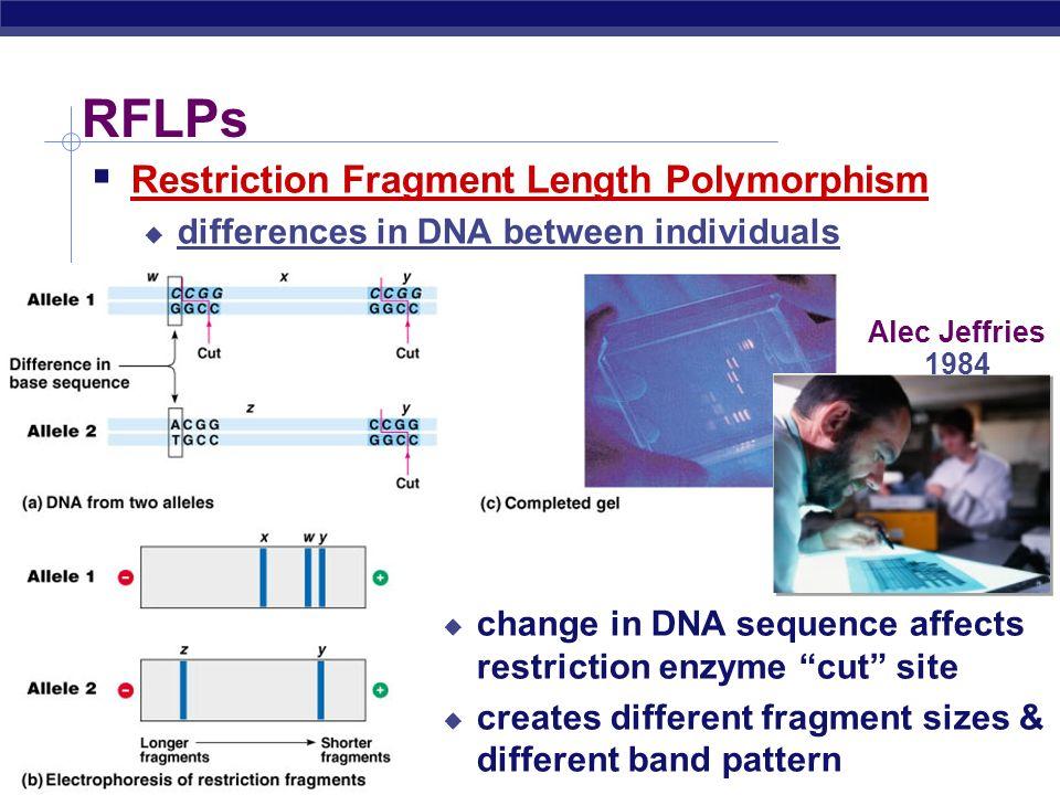 AP Biology Allele 1 GCTTGTAACGGCCTCATCATCATTCGCCGGCCTACGCTT CGAACATTGCCGGAGTAGTAGTAAGCGGCCGGATGCGAA Differences between people cut sites DNA –+ allele