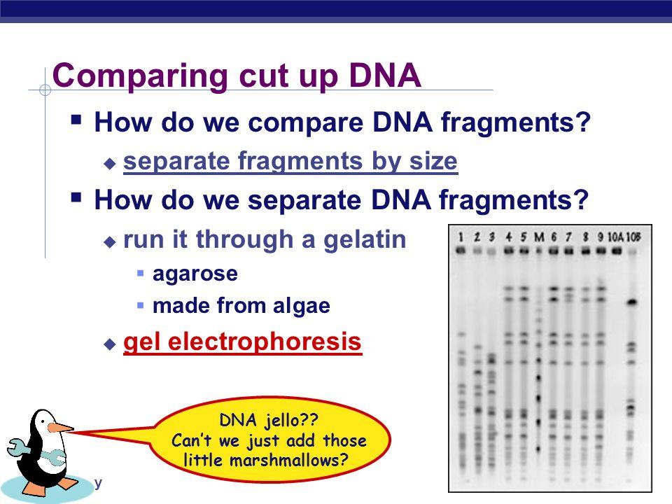 AP Biology Allele 1 GCTTGTAACGGCCTCATCATCATTCGCCGGCCTACGCTT CGAACATTGCCGGAGTAGTAGTAAGCGGCCGGATGCGAA repeats DNA patterns for DNA fingerprints cut sites GCTTGTAACG GCCTCATCATCATCGCCG GCCTACGCTT CGAACATTGCCG GAGTAGTAGTAGCGGCCG GATGCGAA 123 DNA –+ allele 1 Cut the DNA