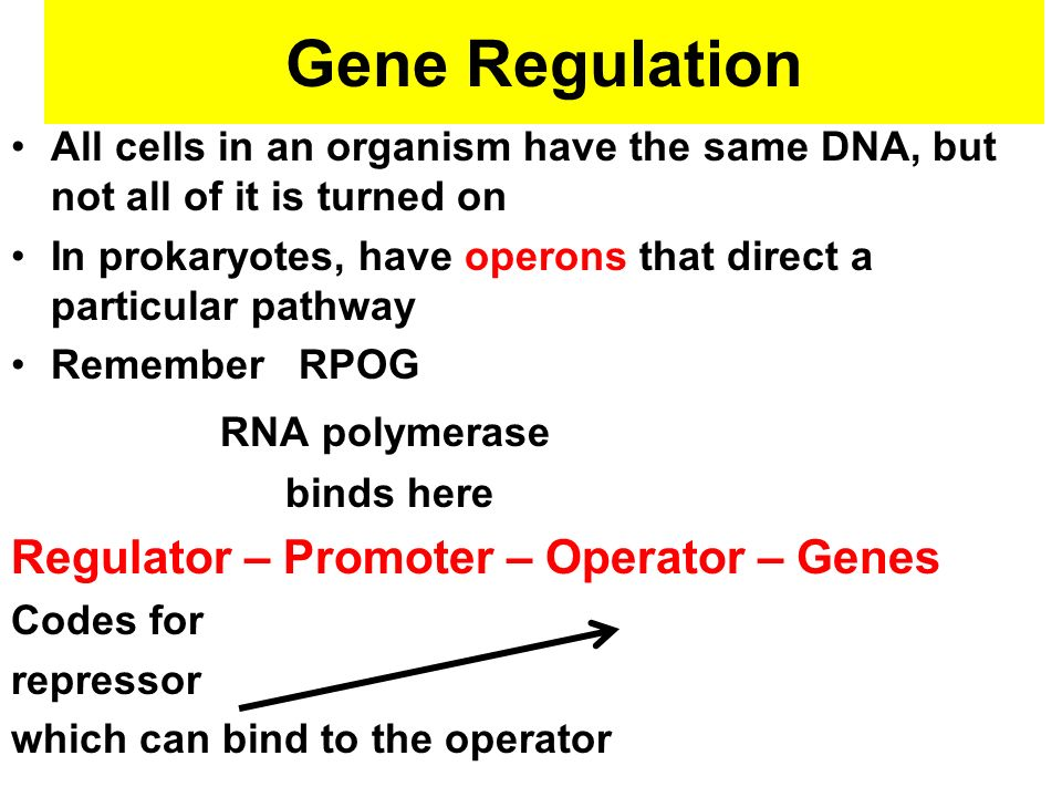 Gene Regulation All cells in an organism have the same DNA, but not all of it is turned on In prokaryotes, have operons that direct a particular pathw