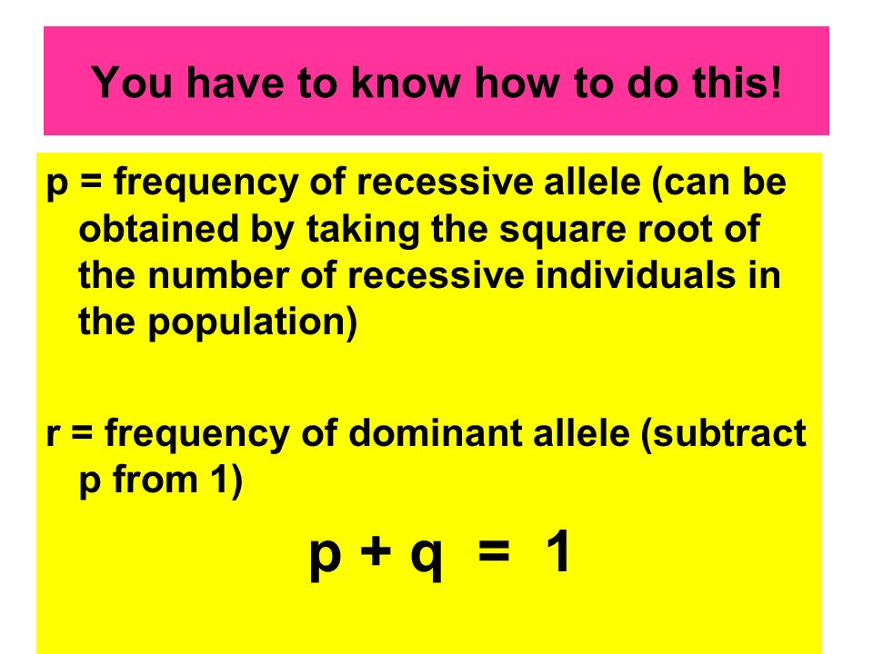 You have to know how to do this! p = frequency of recessive allele (can be obtained by taking the square root of the number of recessive individuals i