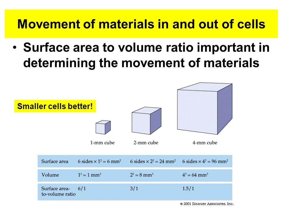 Movement of materials in and out of cells Surface area to volume ratio important in determining the movement of materials Smaller cells better!
