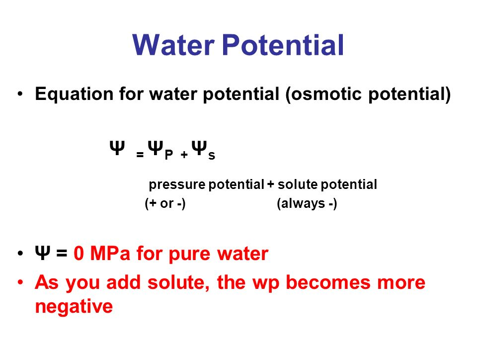Water Potential Equation for water potential (osmotic potential) Ψ = Ψ P + Ψ s pressure potential + solute potential (+ or -) (always -) Ψ = 0 MPa for