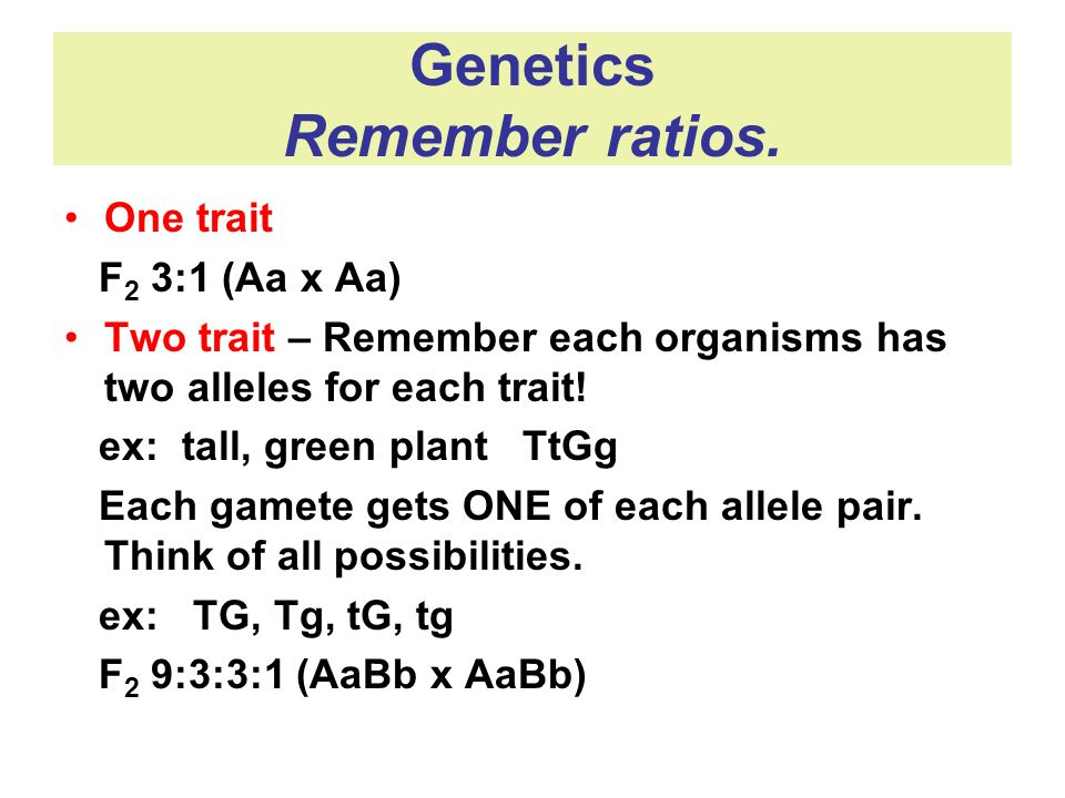 Genetics Remember ratios. One trait F 2 3:1 (Aa x Aa) Two trait – Remember each organisms has two alleles for each trait! ex: tall, green plant TtGg E