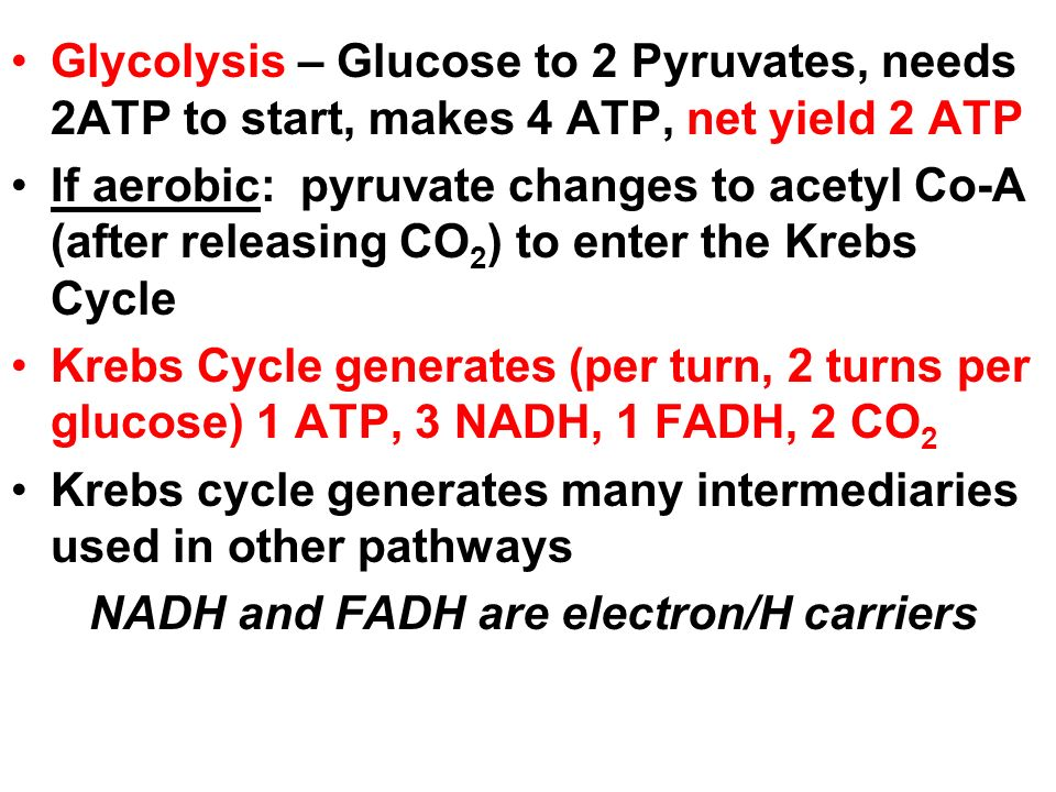Glycolysis – Glucose to 2 Pyruvates, needs 2ATP to start, makes 4 ATP, net yield 2 ATP If aerobic: pyruvate changes to acetyl Co-A (after releasing CO