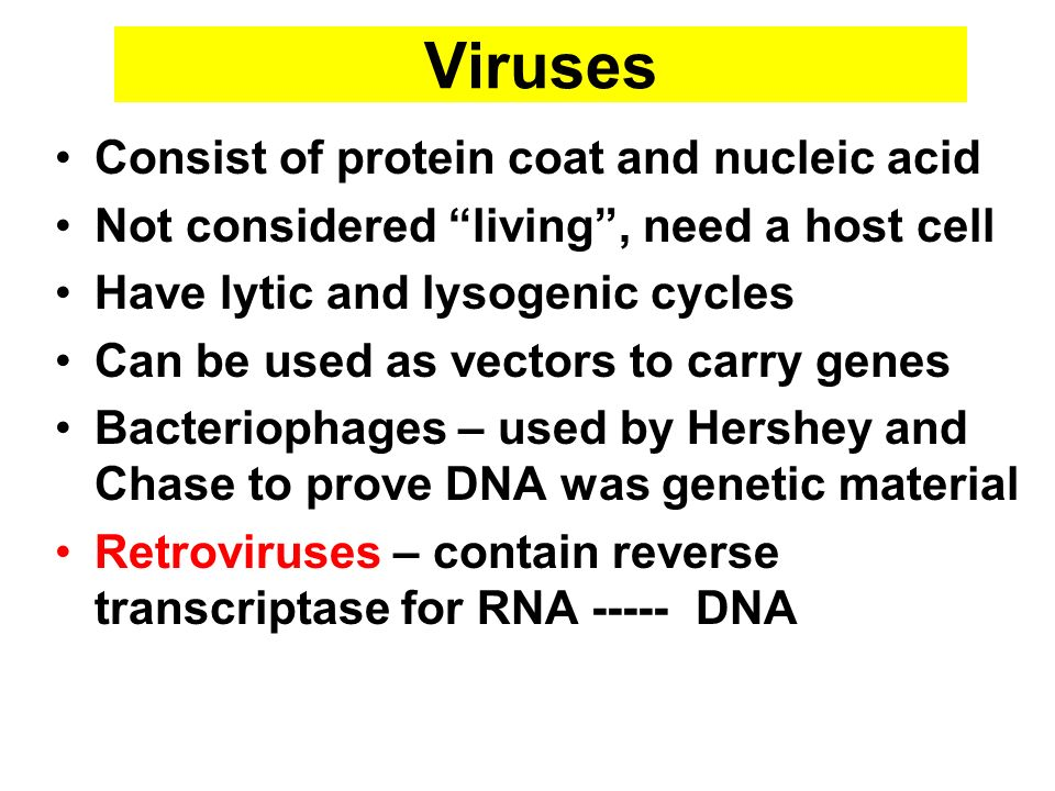 Viruses Consist of protein coat and nucleic acid Not considered living, need a host cell Have lytic and lysogenic cycles Can be used as vectors to car