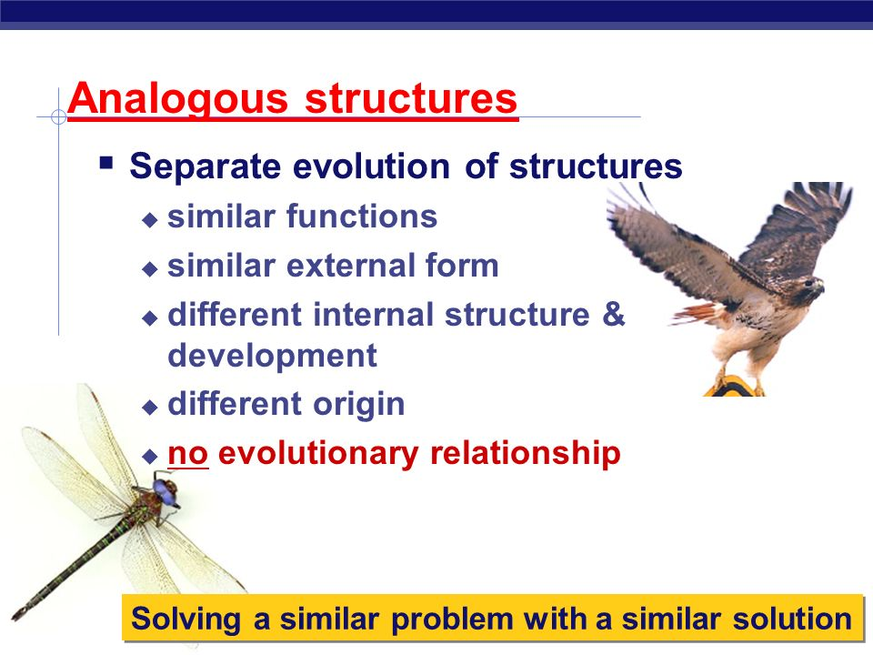 Homologous Structures Produced by divergent evolution Your typical population divided, evolves in two separate directions scenario Structure present i