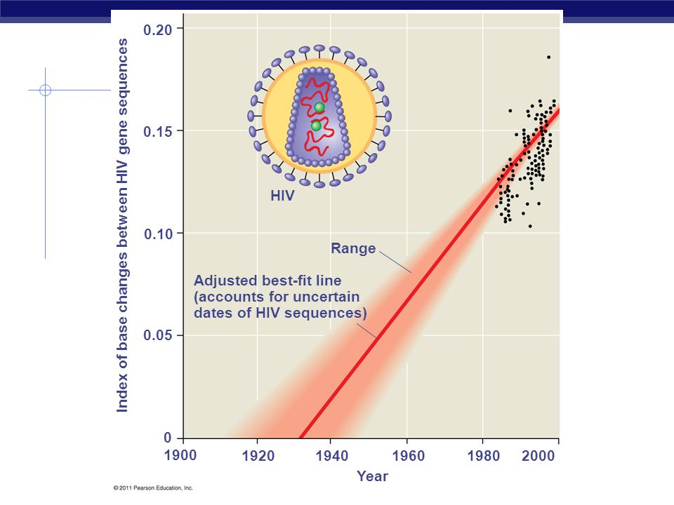 Molecular Clocks Example: Use of molecular clocks demonstrates that HIV leapt from simians to humans in the 1930s