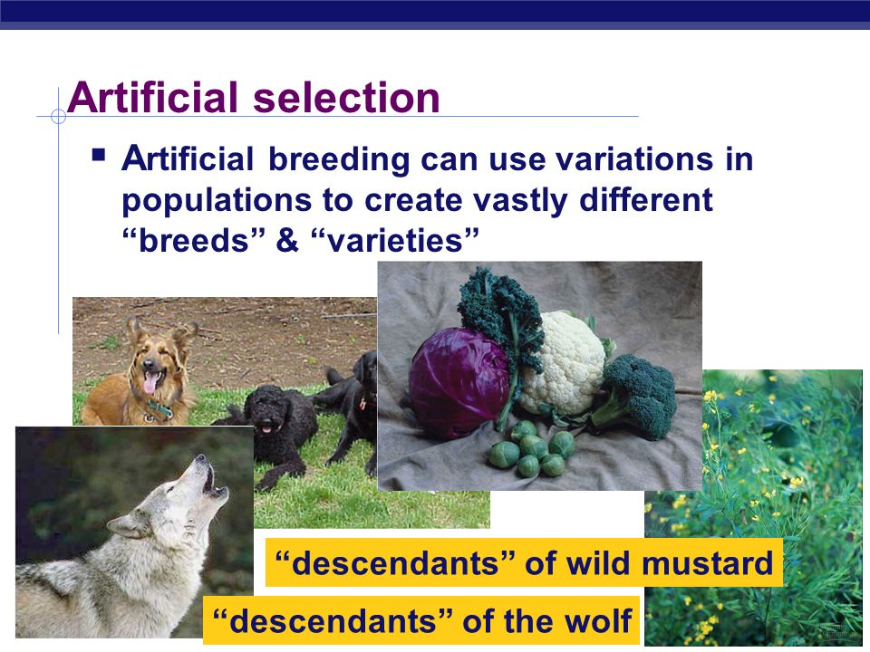 Active Change Examples of ongoing change Artificial selection Antibiotic resistance Industrial melanism