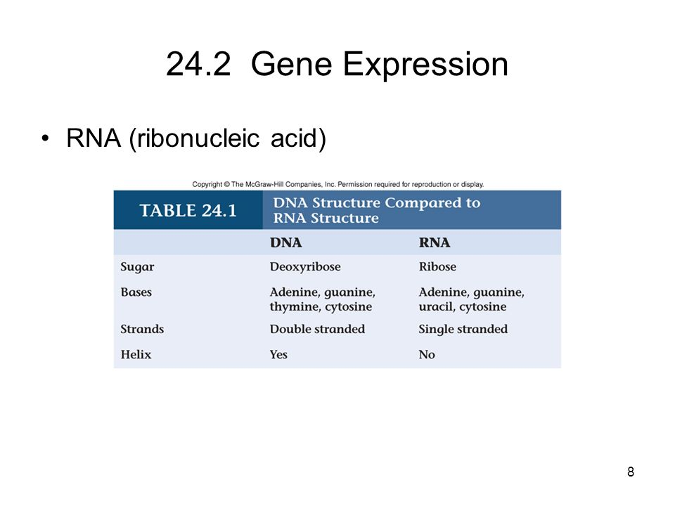 24.2 Gene Expression RNA (ribonucleic acid) 8