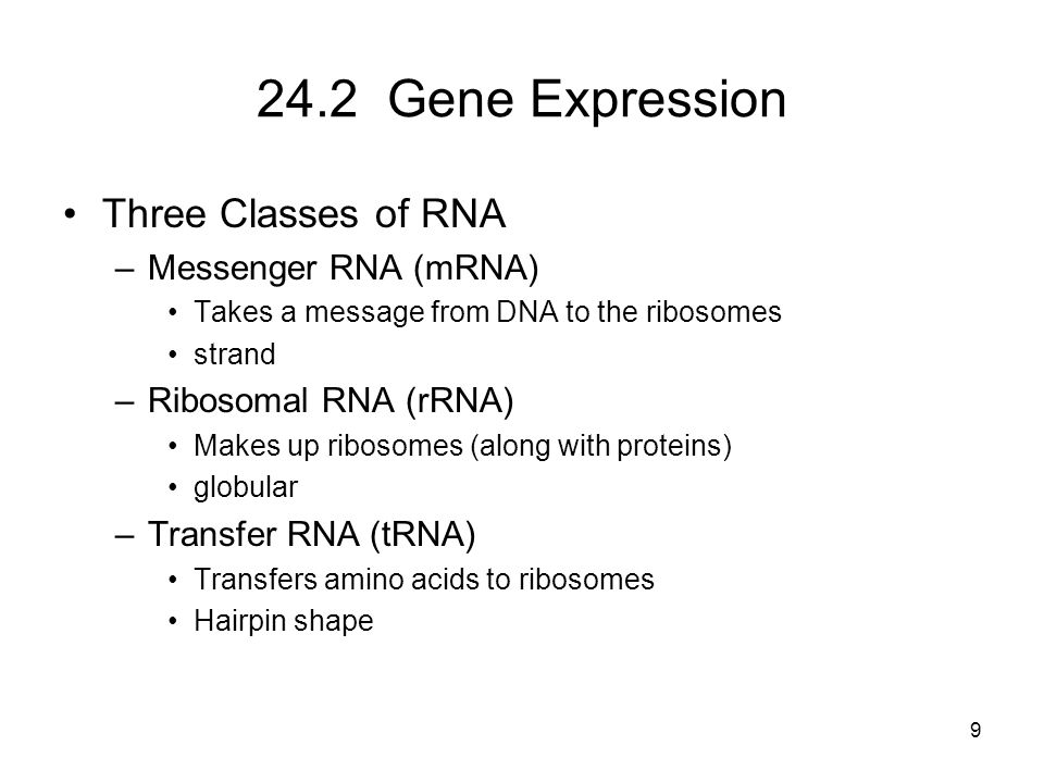 24.2 Gene Expression Three Classes of RNA –Messenger RNA (mRNA) Takes a message from DNA to the ribosomes strand –Ribosomal RNA (rRNA) Makes up riboso