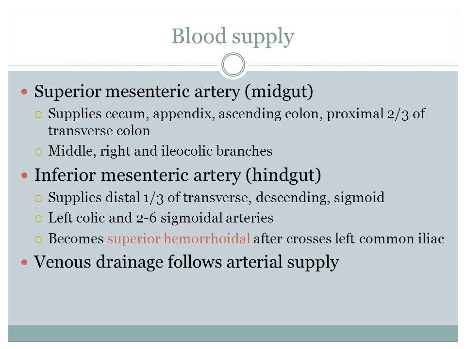 Blood supply Superior mesenteric artery (midgut) Supplies cecum, appendix, ascending colon, proximal 2/3 of transverse colon Middle, right and ileocol