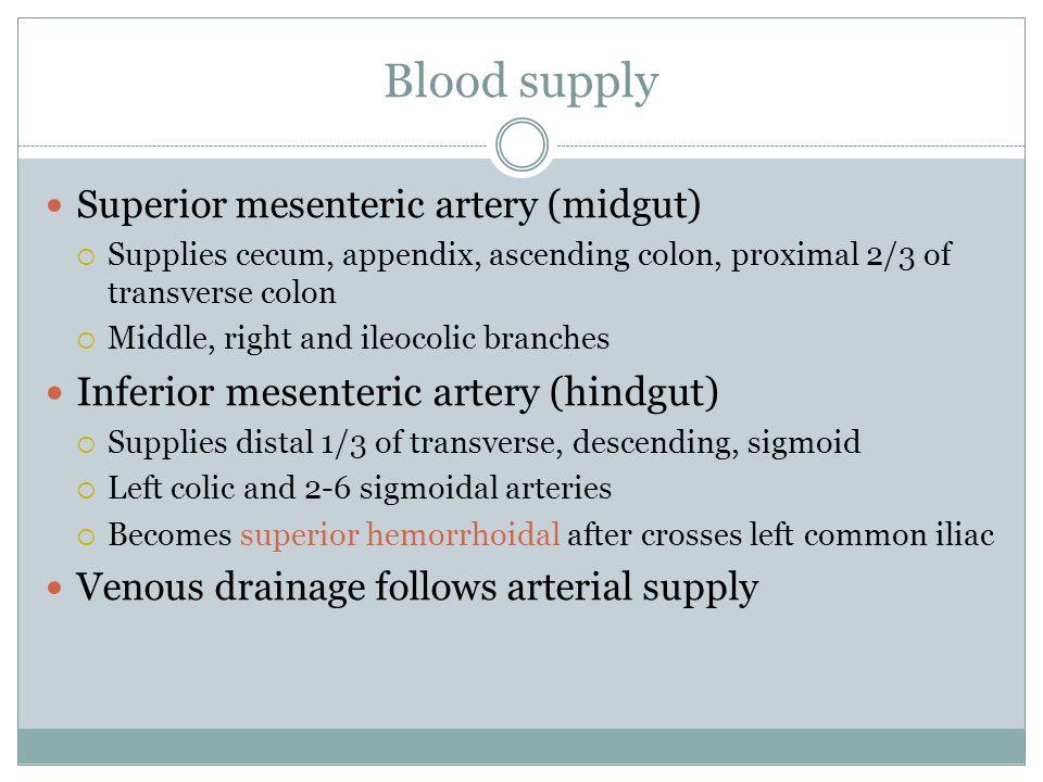 Blood supply Superior mesenteric artery (midgut) Supplies cecum, appendix, ascending colon, proximal 2/3 of transverse colon Middle, right and ileocol