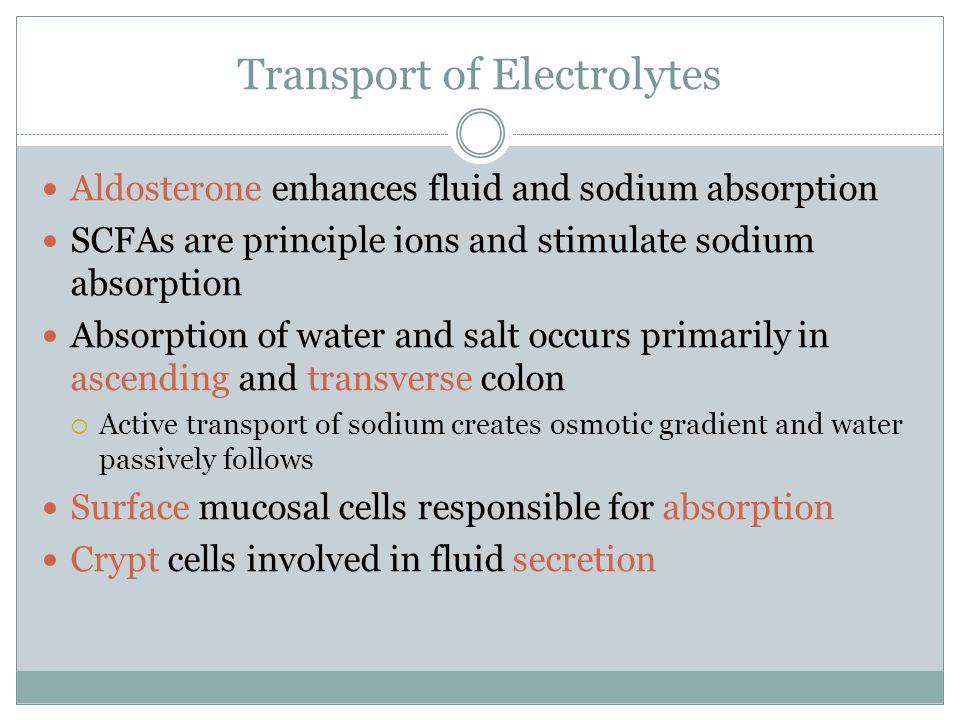 Transport of Electrolytes Aldosterone enhances fluid and sodium absorption SCFAs are principle ions and stimulate sodium absorption Absorption of wate