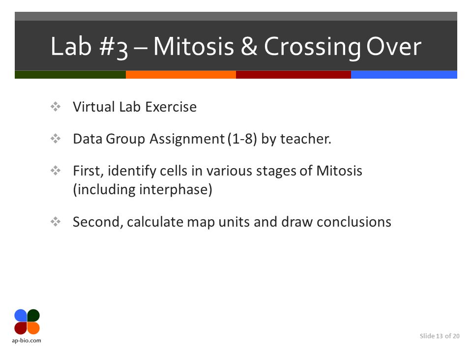 Slide 13 of 20 Lab #3 – Mitosis & Crossing Over Virtual Lab Exercise Data Group Assignment (1-8) by teacher. First, identify cells in various stages o
