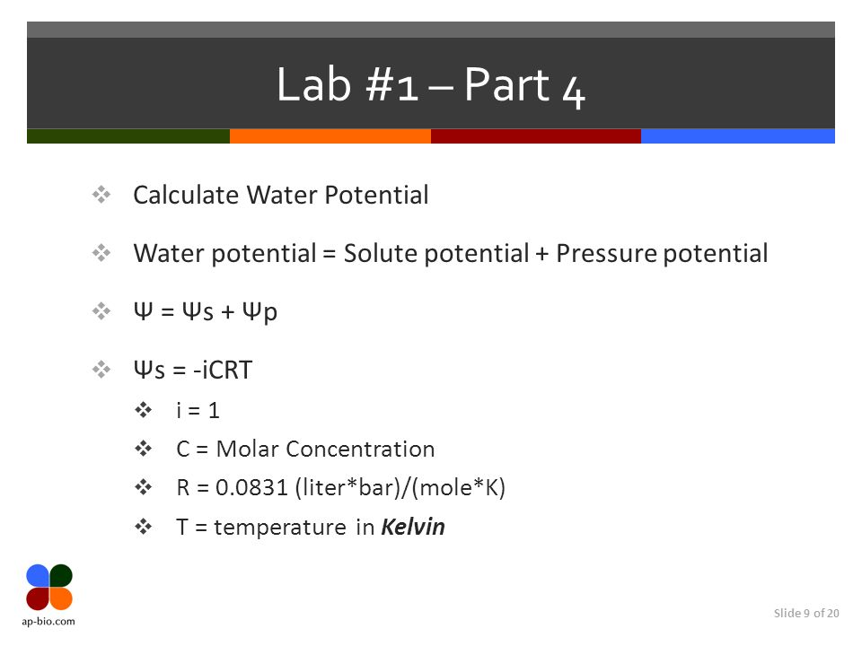 Slide 9 of 20 Lab #1 – Part 4 Calculate Water Potential Water potential = Solute potential + Pressure potential Ψ = Ψs + Ψp Ψs = -iCRT i = 1 C = Molar