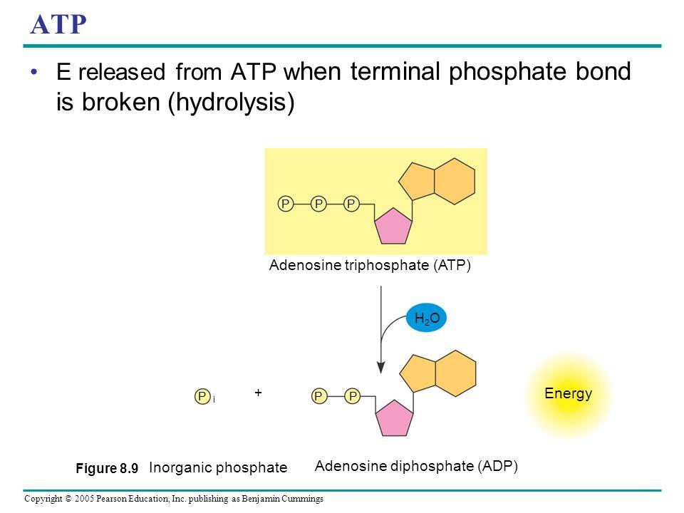 Copyright © 2005 Pearson Education, Inc. publishing as Benjamin Cummings ATP Cellular Energy Currency (adenosine triphosphate) – Cells Energy shuttle.