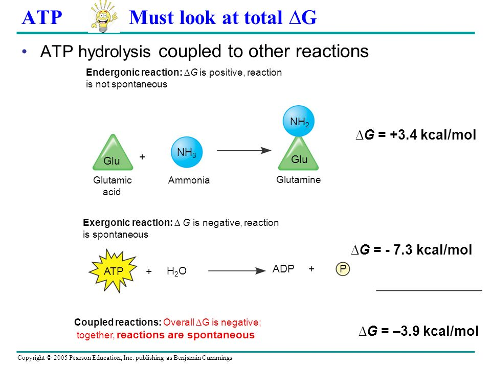 Copyright © 2005 Pearson Education, Inc. publishing as Benjamin Cummings ATP E released from ATP w hen terminal phosphate bond is broken (hydrolysis)