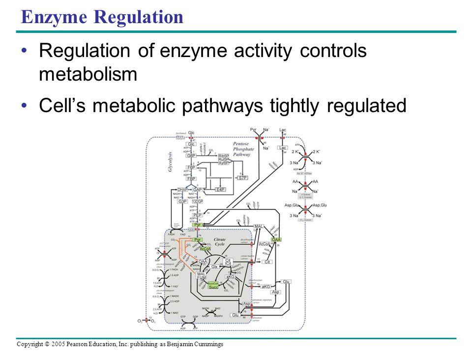 Copyright © 2005 Pearson Education, Inc. publishing as Benjamin Cummings Enzymes Cofactors – Nonprotein enzyme helper Cu +, Mg 2+, Mn 2+ Coenzymes – O