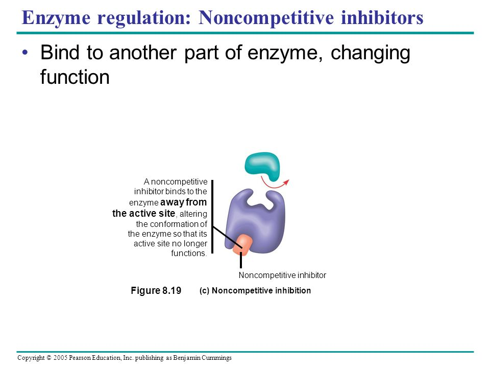 Copyright © 2005 Pearson Education, Inc. publishing as Benjamin Cummings Enzyme Regulation: Competitive inhibitors Bind to active site, compete w/ sub