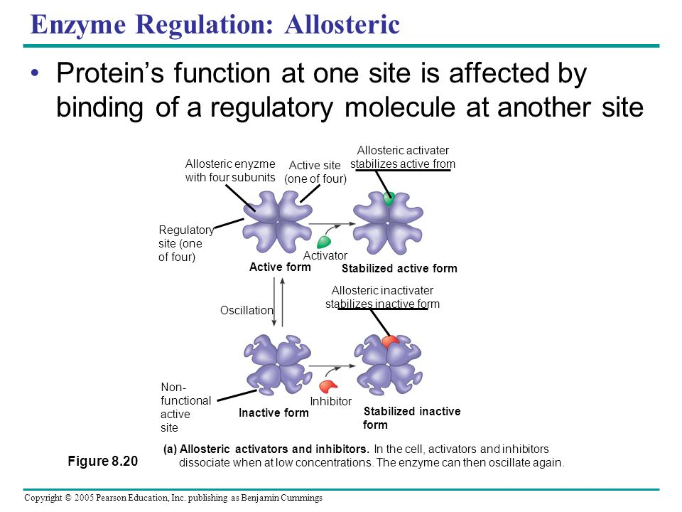 Copyright © 2005 Pearson Education, Inc. publishing as Benjamin Cummings Enzyme regulation: Noncompetitive inhibitors Bind to another part of enzyme,