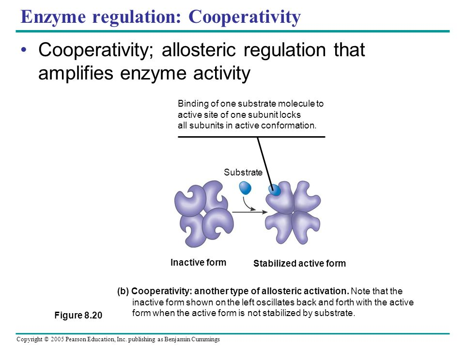 Copyright © 2005 Pearson Education, Inc. publishing as Benjamin Cummings Enzyme Regulation: Allosteric Proteins function at one site is affected by bi