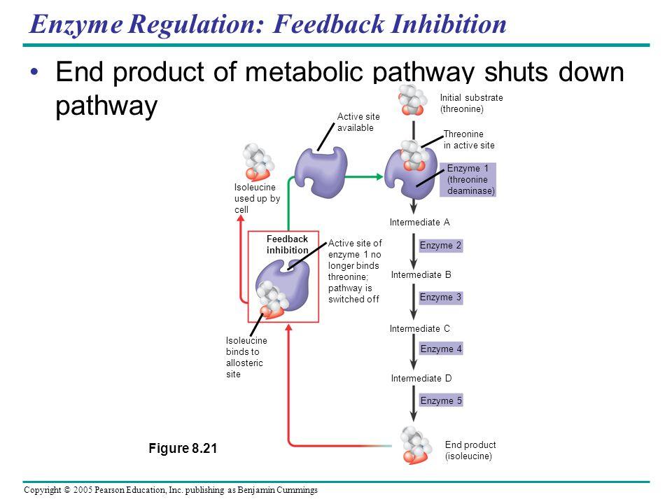Copyright © 2005 Pearson Education, Inc. publishing as Benjamin Cummings Enzyme regulation: Cooperativity Cooperativity; allosteric regulation that am