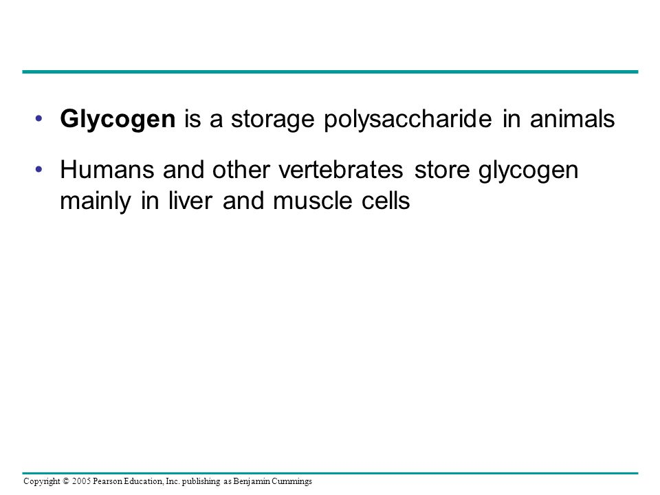 Copyright © 2005 Pearson Education, Inc. publishing as Benjamin Cummings Glycogen is a storage polysaccharide in animals Humans and other vertebrates