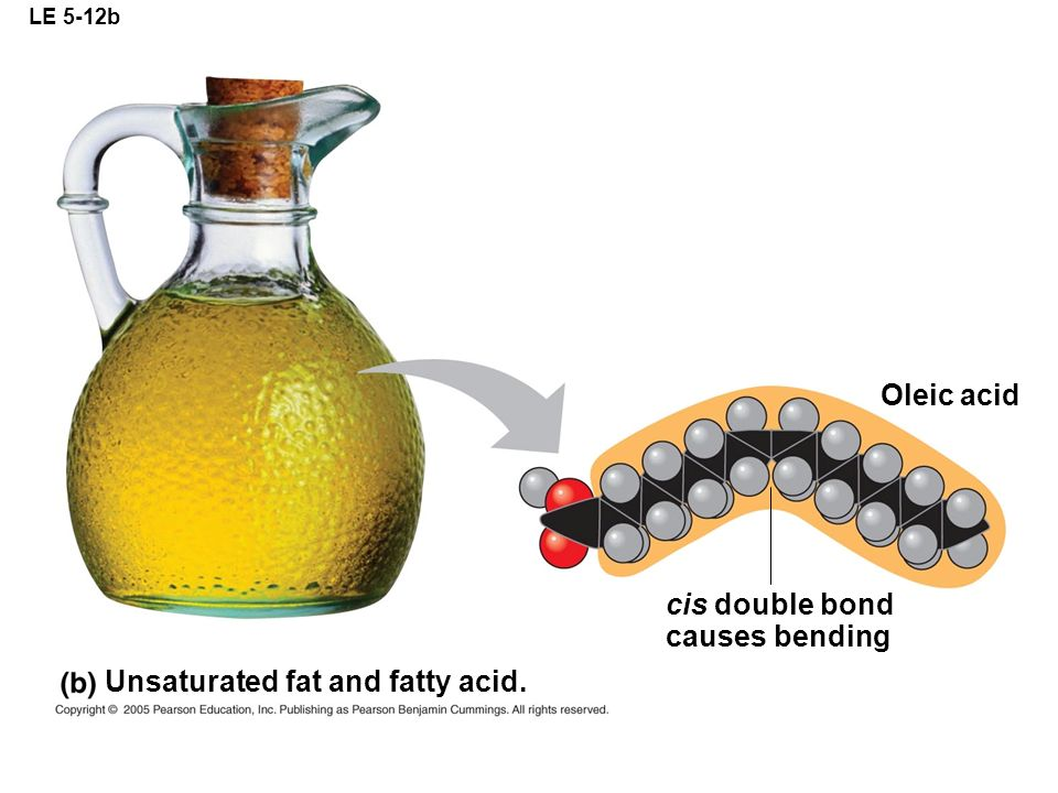 LE 5-12b Unsaturated fat and fatty acid. Oleic acid cis double bond causes bending