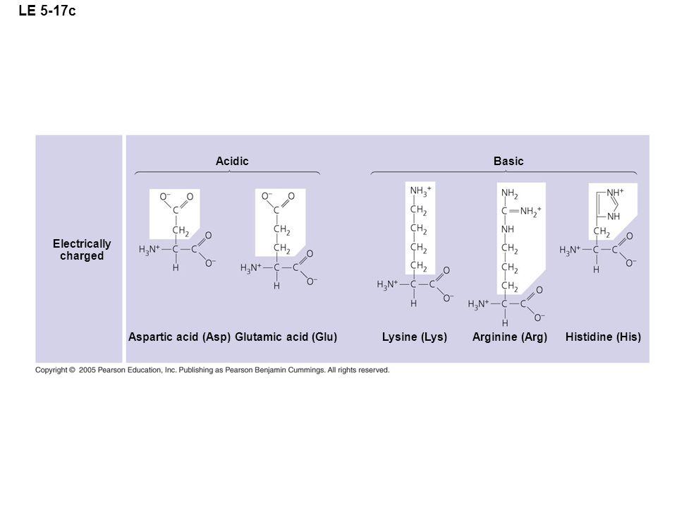 LE 5-17c Electrically charged Aspartic acid (Asp) Acidic Basic Glutamic acid (Glu) Lysine (Lys)Arginine (Arg) Histidine (His)
