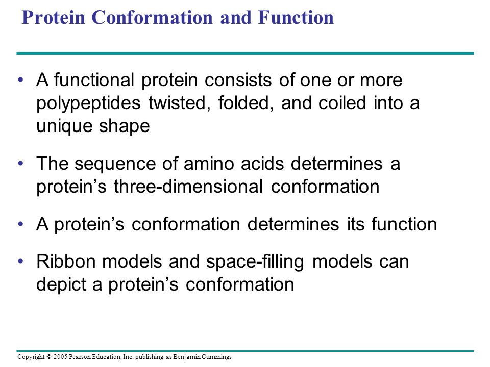 Copyright © 2005 Pearson Education, Inc. publishing as Benjamin Cummings Protein Conformation and Function A functional protein consists of one or mor