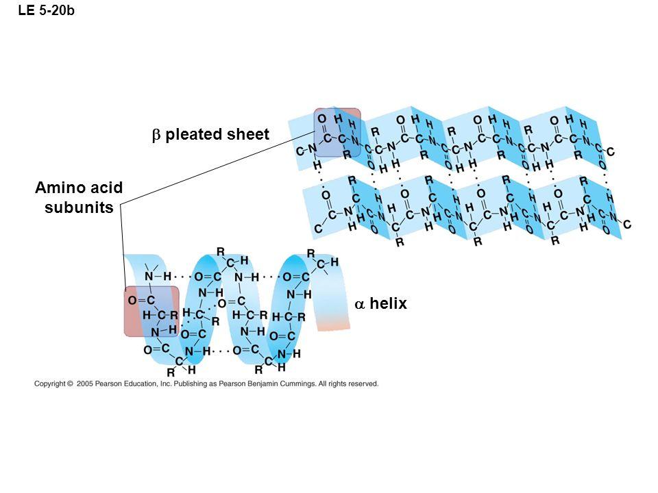 LE 5-20b Amino acid subunits pleated sheet helix