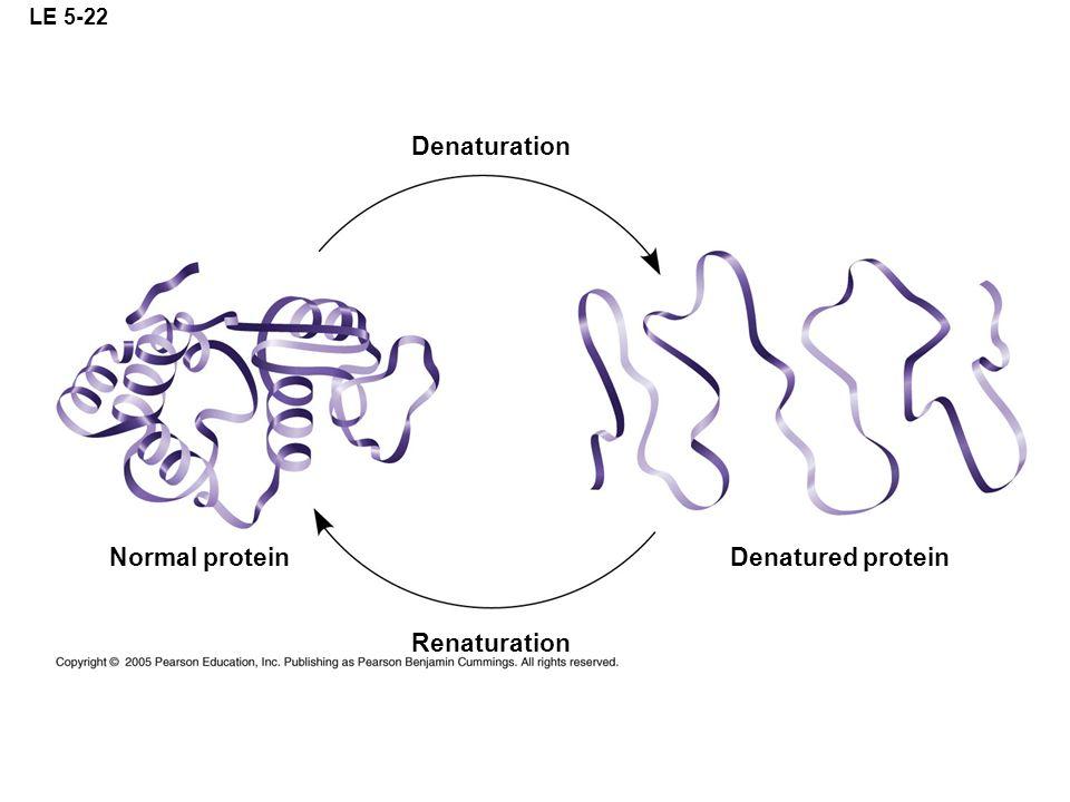 LE 5-22 Denaturation Renaturation Denatured proteinNormal protein