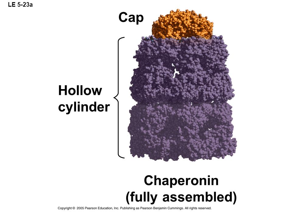 LE 5-23a Chaperonin (fully assembled) Hollow cylinder Cap